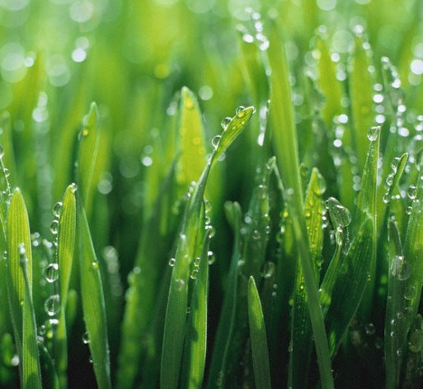 Let us make your lawn greener and do your spring clean up